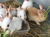 Variedade e coelhos pequenos coloridos Imagem de Stock