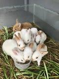 Variedade e coelhos pequenos coloridos Foto de Stock