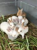 Variedade e coelhos pequenos coloridos Fotos de Stock Royalty Free