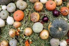 Variedades da abóbora e da cebola no fundo da palha Fotografia de Stock Royalty Free