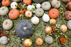 Variedades da abóbora e da cebola no fundo da palha Imagem de Stock