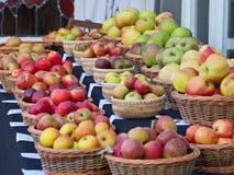 Variedades de Apple na exposição foto de stock