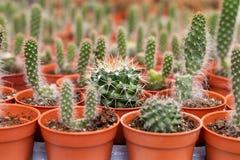 Variedades de planta del cactus en el pote Ciérrese encima de la visión Foco selectivo fotos de archivo