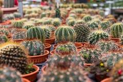 Variedades de planta del cactus en el pote Ciérrese encima de la visión Foco selectivo imagenes de archivo