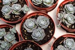 Variedades de planta del cactus en el pote Ciérrese encima de la visión Foco selectivo fotos de archivo libres de regalías