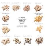 Variedades diferentes das sementes dos vegetais foto de stock