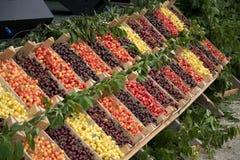 Variedades diferentes de fruto da cereja Imagem de Stock