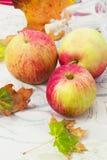 Variedades do outono das maçãs Fotografia de Stock Royalty Free