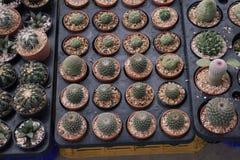 Varieer Cactus Royalty-vrije Stock Afbeeldingen