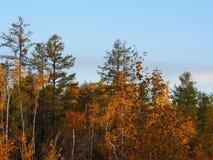 Variegated autumn colors stock photos