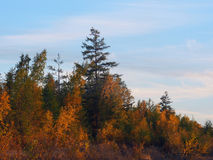 Variegated autumn colors stock photography