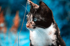Variegated cat on a beautiful strange background. Magic picture, fabulous color effects stock photo