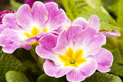 Variegated flowers Stock Images