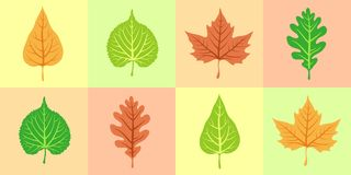 Variegated leaves of trees Stock Photography