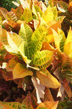 Variegated patterns and colors Stock Image