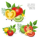 Variegated ripe fresh tomatoes. Vector illustration. Set of variegated ripe fresh realistic tomatoes composition with leaves, blossom and dill  on white Royalty Free Stock Photos
