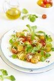 Variegated tomatoes salad Stock Image