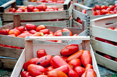 Variegated wooden box with tomatoes and fresh cut vegetables Jus Royalty Free Stock Images