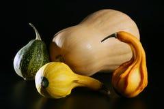 varierande färgrik pumpa Royaltyfria Bilder