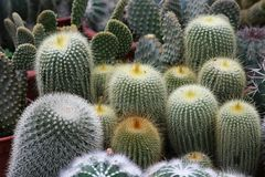 Varies cactuses Stock Photography