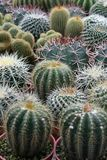 Varies Cactuses. In the garden Stock Photos