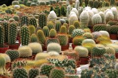 Varies Cactuses. In the garden stock photo