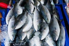 Varietà del primo piano di frutti di mare del pesce fresco su ghiaccio nel mercato Fotografia Stock