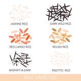 Varietà del riso Zizzania scura, riso del risotto, riso del gelsomino, riso Basmati e rosso del carico, riso vestito Illustrazion illustrazione di stock