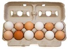 Varietà dell'uovo fotografie stock