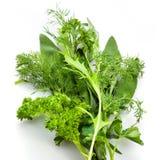 Varietà delle erbe. maggiorane; prezzemolo; aneto, thym Immagini Stock Libere da Diritti