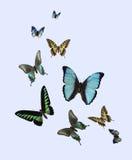Farfalle differenti Fotografia Stock Libera da Diritti