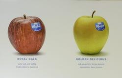 Varietà delle mele fotografie stock