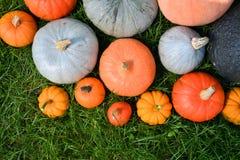 Varietà delle zucche e delle zucche Fotografie Stock