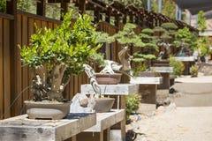Varietà di alberi dei bonsai su esposizione Fotografia Stock Libera da Diritti