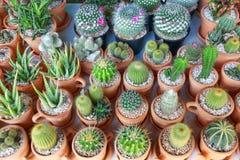 varietà di cactus per il modello ed il fondo Immagini Stock Libere da Diritti