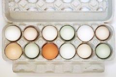 Varietà di dozzine di uova immagini stock