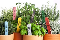 Varietà di erbe conservate in vaso del giardino, primo piano Fotografia Stock Libera da Diritti
