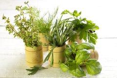 Varietà di erbe fresche sui bordi bianchi Immagine Stock