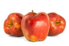 Varietà di fondo principale rosso di bianco dell'isolato delle mele rosse mature P Fotografia Stock