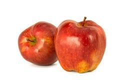 Varietà di fondo principale rosso di bianco dell'isolato delle mele rosse mature P Fotografia Stock Libera da Diritti