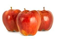 Varietà di fondo principale rosso di bianco dell'isolato delle mele rosse mature P Immagine Stock