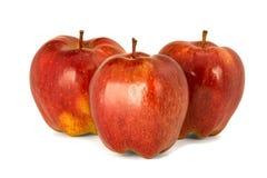 Varietà di fondo principale rosso di bianco dell'isolato delle mele rosse mature P Immagini Stock Libere da Diritti