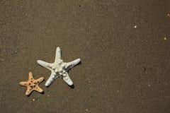 Varietà di forme differenti delle stelle di mare Fotografia Stock