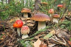 Varietà di funghi cresciuti insieme nel legno Fotografie Stock