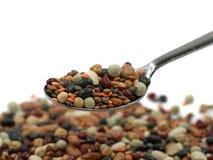 Varietà di legumi variopinti ricchi in proteine sul cucchiaio d'argento con lo spazio della copia, fine su immagine stock libera da diritti