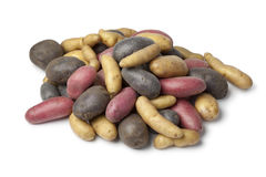 Varietà di patate di heirloom immagine stock
