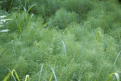 Varietà di piante selvatiche Fotografia Stock