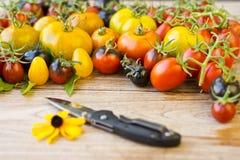 Varietà di pomodori rari differenti Immagine Stock Libera da Diritti