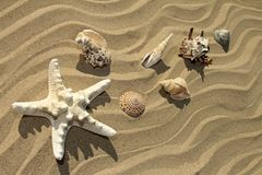 Varietà di stelle e di conchiglie di mare Fotografie Stock Libere da Diritti