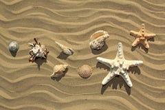 Varietà di stelle e di conchiglie di mare Fotografia Stock
